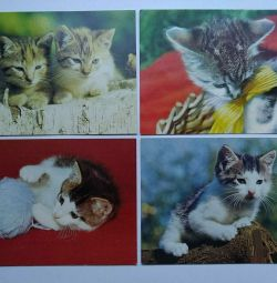 Postcards with kittens.
