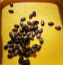 Семена жeлтого арбуза, вышлю почтой