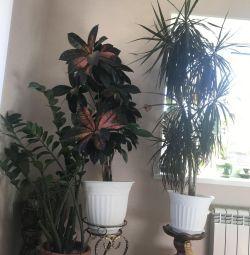 Indoor flowers.