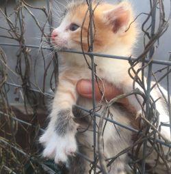 Пристраиваются два котeнка!!!