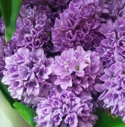 Flowers, bouquets and compositions