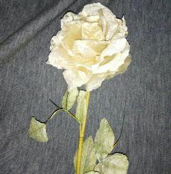 Διακοσμητικό λουλούδι