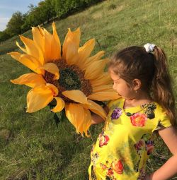 Giant sunflowers !!!