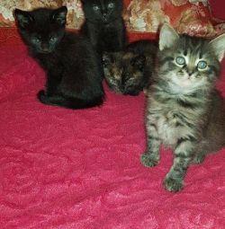 URGENTLY! Kittens