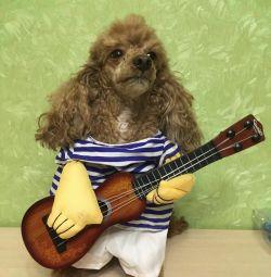 Costum de câine cu chitară