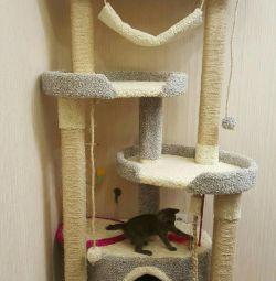 Γατάκια, συγκρότημα γάτας