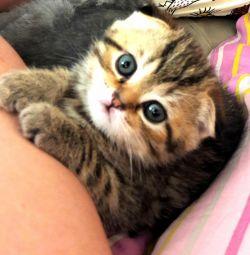 Kitten Fold Girl