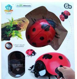 Ladybug on the radio