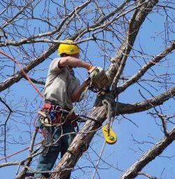 Спил деревьев, расчистка участков
