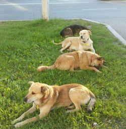 Câinii au nevoie de o casă, o cabină, o incintă