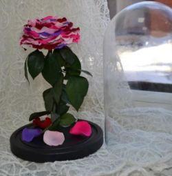 Роза в колбе стабилизация