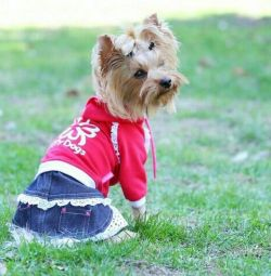 Dress with denim skirt (clothes for dogs)