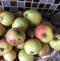 Τα μήλα