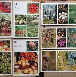 Natura este cartea noastră de avere a URSS
