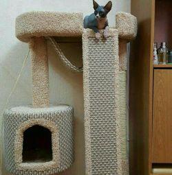 Συγκρότημα για γάτες, γατάκια, γάτες