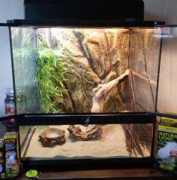 Рептилия vivarium