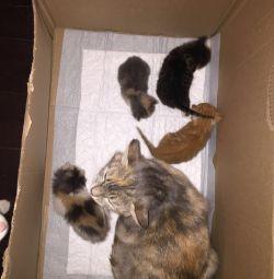 Котята в добрые и ответственные руки!!!