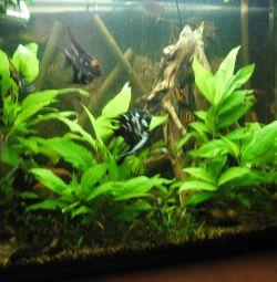 Aquarium plants.