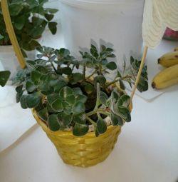 Kapalı bitkiler