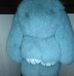 Bunny. New