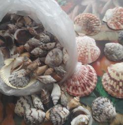 Seashells and paintings