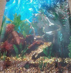 фон акваріумний