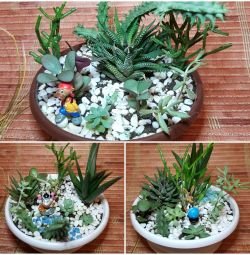 Bahçe succulents