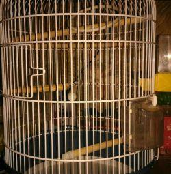 Ferplast cage !!