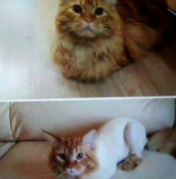 Hijyenik saç kesimi 🐈 kedi kedileri