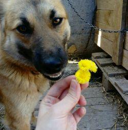 Dog smiling Klepa