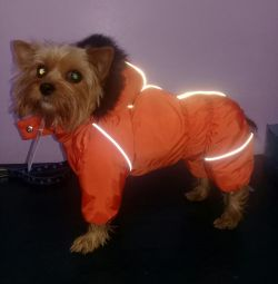 Αλάσκα για σκυλάκια