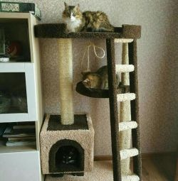 Kittens with a house, a complex for a cat