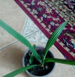 Palms και διαφορετικές 🌱🌴🌹🌼🌸🌷🌵🌺🌿