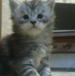 Future lynx