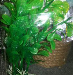 Φυτά για ενυδρεία ανά κιλό ζάχαρης
