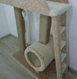 Yavru kedi, bir ev için bir kedi için karmaşık