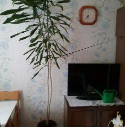 Большой цветок в горшке пальма