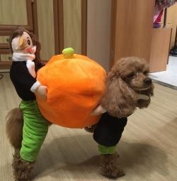 Costum pentru câini cu dovleac