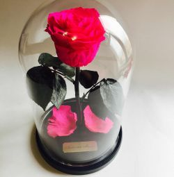 Beautiful lively rose in Premium flask