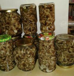 Marionete ciuperci