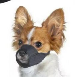 Medium / Large Dog Muzzle