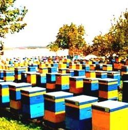 Φυσικό μέλι χονδρικής