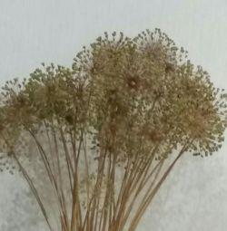 Flori uscate