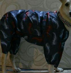 Büyük bir köpek için yağmurluk!