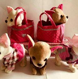 Chi Chi αγάπη Dog Chi Chi αγάπη σε ένα πορτοφόλι