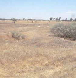 Два поля в Лиопетри, Фамагуста