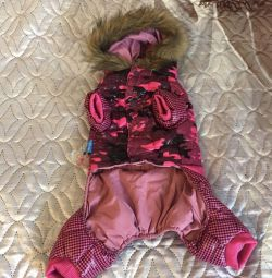 Jumpsuit for a small dog.