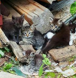 Τα γατάκια σε καλά χέρια