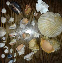 Seashells.