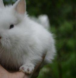 Розплідник карликових кроликів
